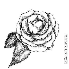 Création d'illustration florale